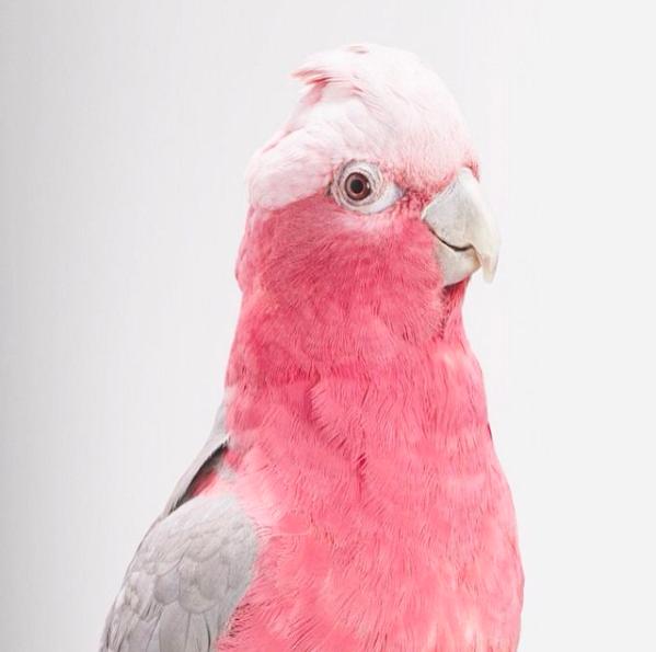 Het nut van papegaaien